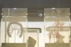 The Glass Veil