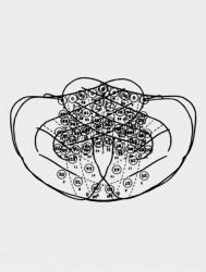 Engram Series (10)