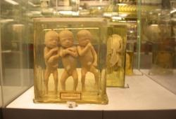Water Babies (Triplets)