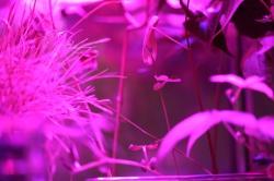 Astroculture (Shelf Life) (17)