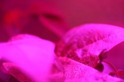 Astroculture (Shelf Life) (16)