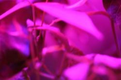 Astroculture (Shelf Life) (13)