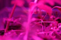Astroculture (Shelf Life) (11)