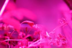 Astroculture (Shelf Life) (10)
