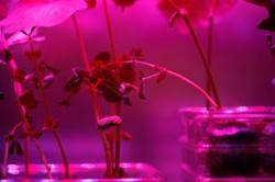 Astroculture (Shelf Life) (07)