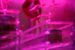 Astroculture (Shelf Life) (03)