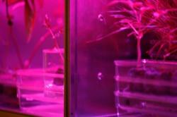 Astroculture (Shelf Life) (02)