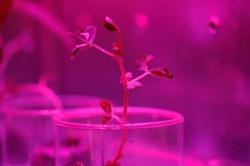 Astroculture (Shelf Life) (01)
