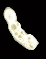 Stem Cells (20)