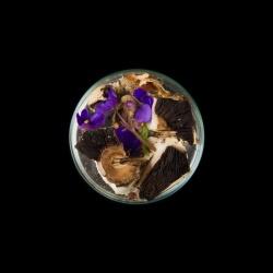 Vanitas (in a Petri dish) 06