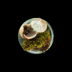Vanitas (in a Petri dish) 05