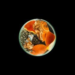 Vanitas (in a Petri dish) 04