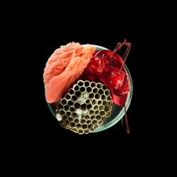 Vanitas (in a Petri dish) 03