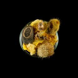 Vanitas (in a Petri dish) 11