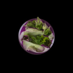 Vanitas in a Petri Dish (19)
