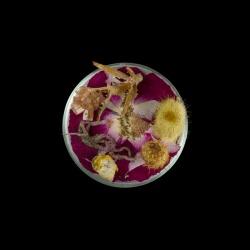 Vanitas in a Petri Dish (24)