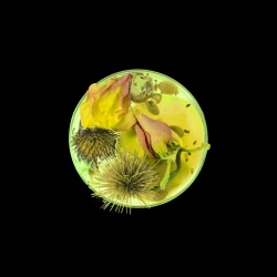 Vanitas in a Petri Dish (23)