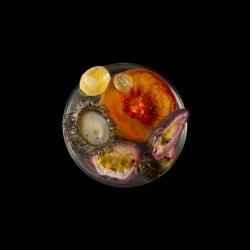 Vanitas in a Petri Dish (21)