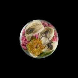 Vanitas (in a Petri dish) 15