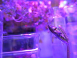Astroculture (Shelf Life) II (3)