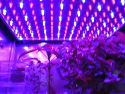 Astroculture (Shelf Life) II (6)