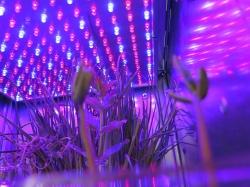 Astroculture (Shelf Life) II (2)