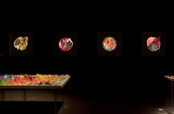 Rainbow Loom  / Vanitas in a Petri dish