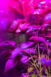 Astroculture (Eternal Return)
