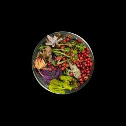 Vanitas (in a Petri dish) 31