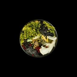 Vanitas (in a Petri dish) 30