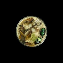 Vanitas (in a Petri dish) 29