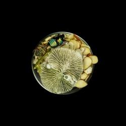 Vanitas (in a Petri dish) 28