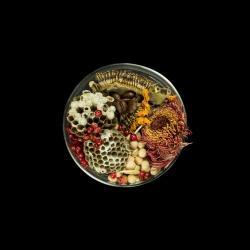 Vanitas (in a Petri dish) 27