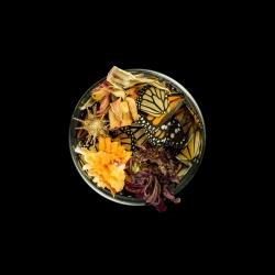 Vanitas (in a Petri dish) 26