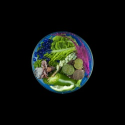 Vanitas (in a Petri dish) 18