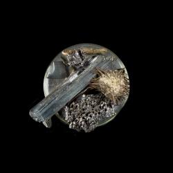 Vanitas (in a Petri dish) 14