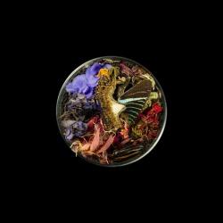 Vanitas (in a Petri dish) 37