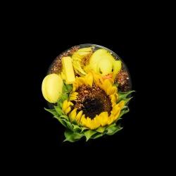 Vanitas (in a Petri dish) 36