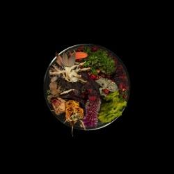 Vanitas (in a Petri dish) 33