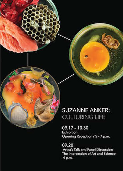 Suzanne Anker: Culturing Life