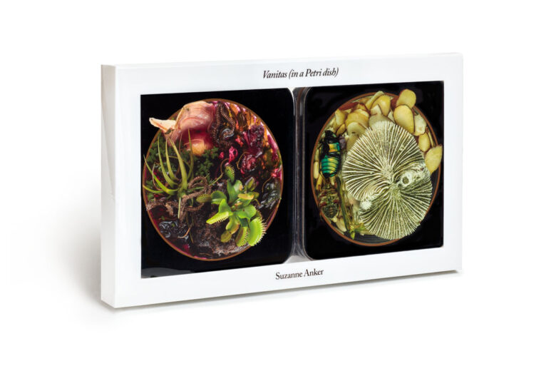 Vanitas (in a Petri dish) - Coasters by Suzanne Anker